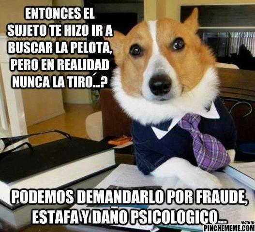 Demonios Las Demandas En Mi Contra Seran Muy Fuertes Xd Funny Dog Memes Dog Memes Legal Humor