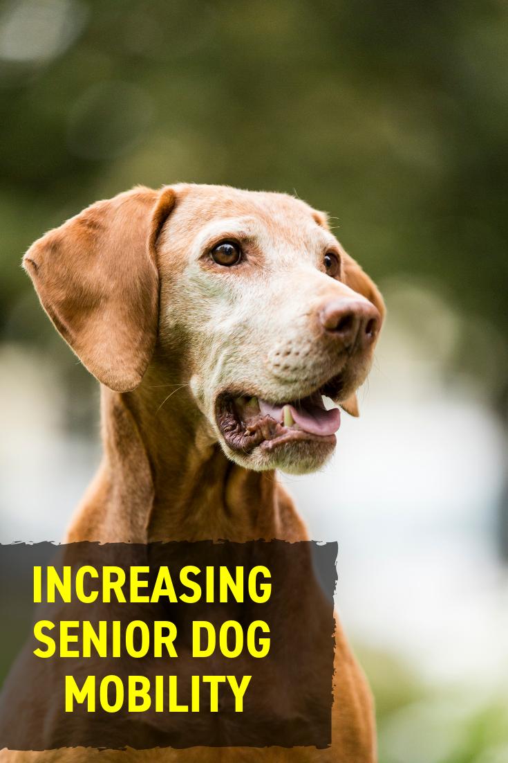 Increasing Senior Dog Mobility Senior Dog Dogs Older Dogs