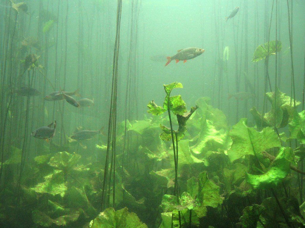 Underwater pond life google search art pinterest for Garden pond life