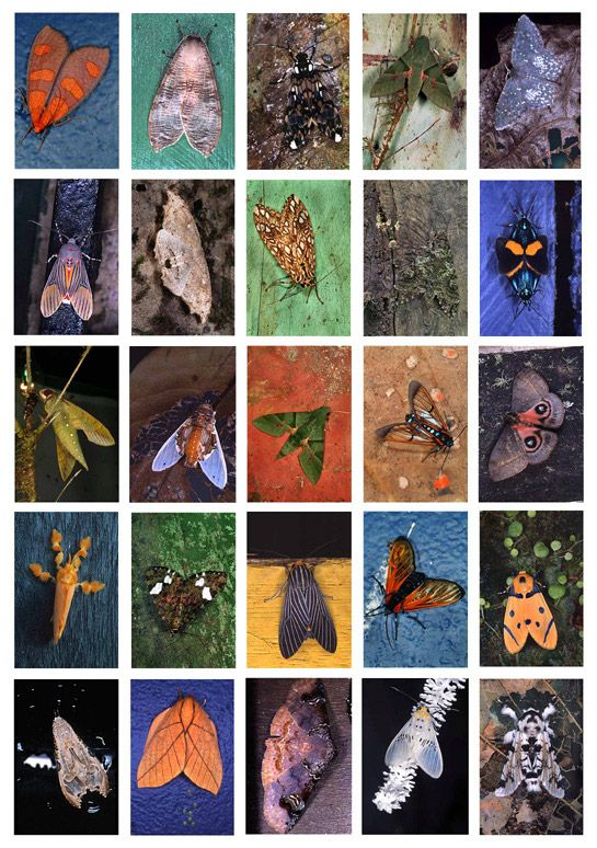 Mariposas Nocturnas, La Fortuna Index No. 1, Panama, 2003