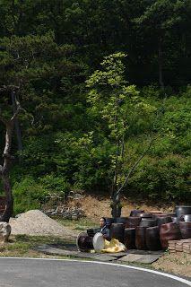 몸저생사 스토리: 가나안농군학교 장독대 서울문화홍보원 국악단장 명창노광희 한오백년