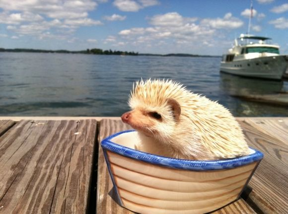 My Hedgehog is ready for a summer by the water