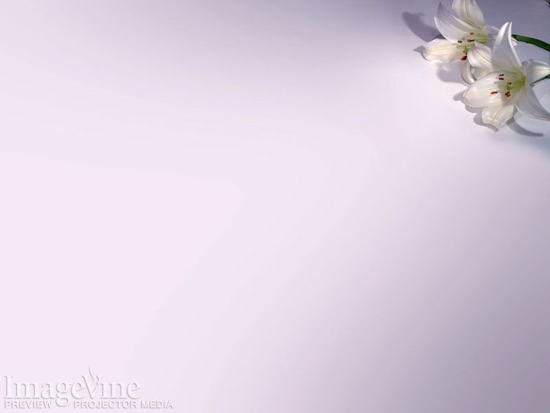 easter lily - Google Search pictures for scripture Pinterest - religious powerpoint template