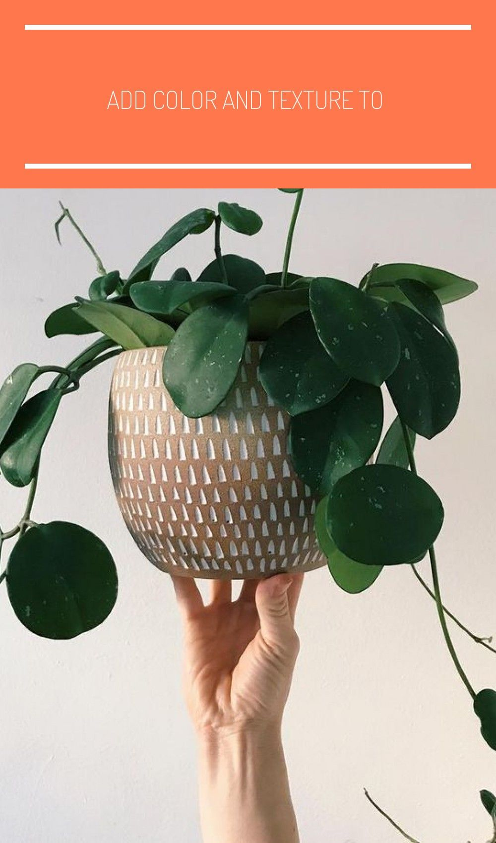 Add color and texture to your small space with living plants #xtraroom #smallspa #cactus plants houseplant