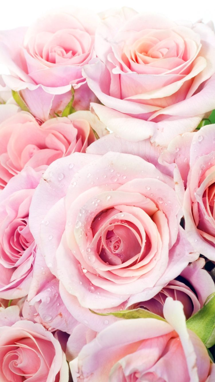 Beautiful Pink roses ★ Download more floral Spring iPhone