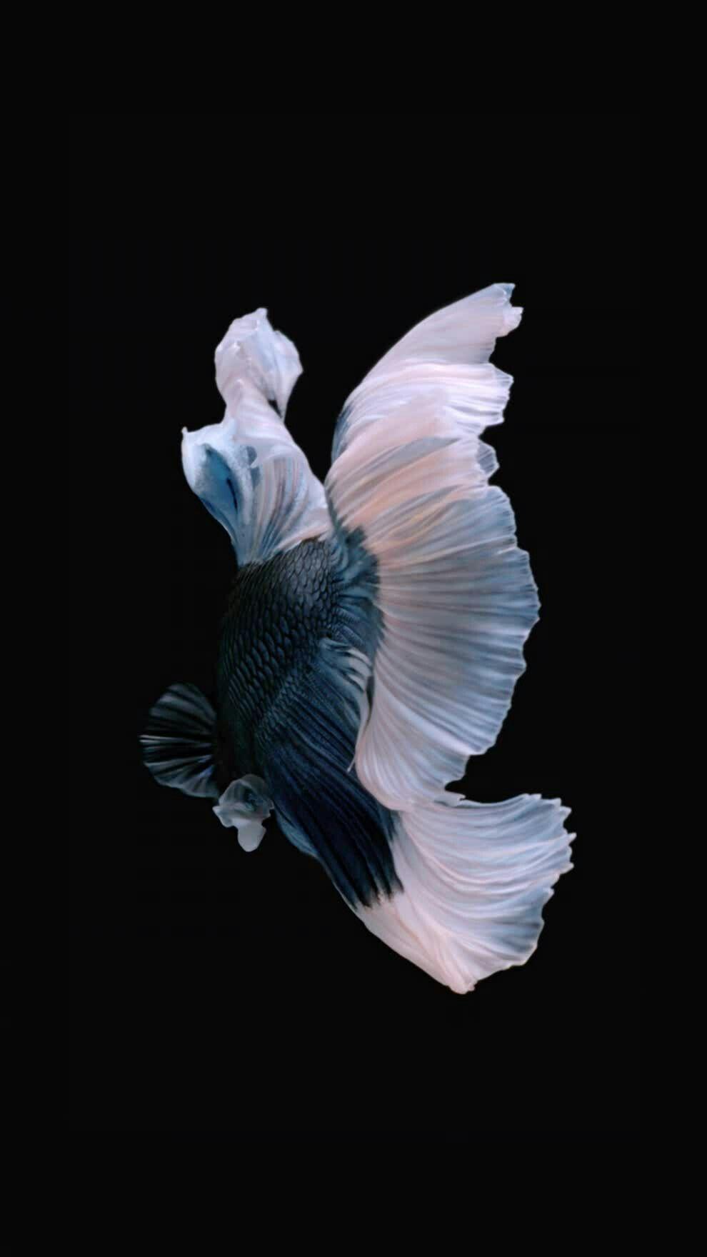 Pin De Shashank En Beautiful Fish Fondo De Pantalla Rosado Para