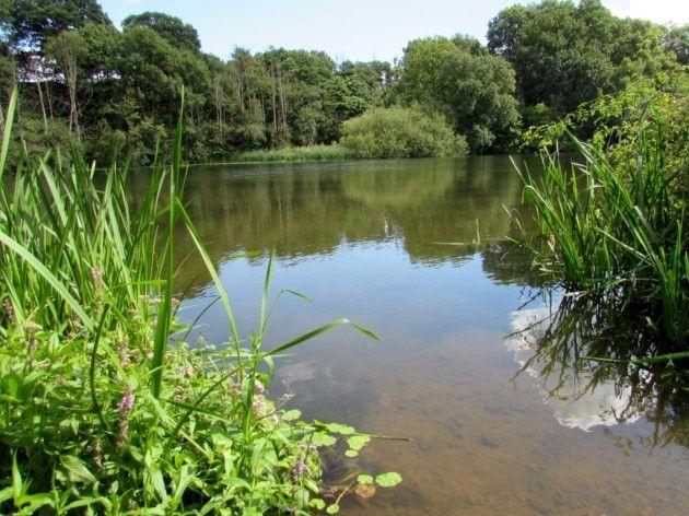 6 great woodland walks in Cheshire | Cheshire
