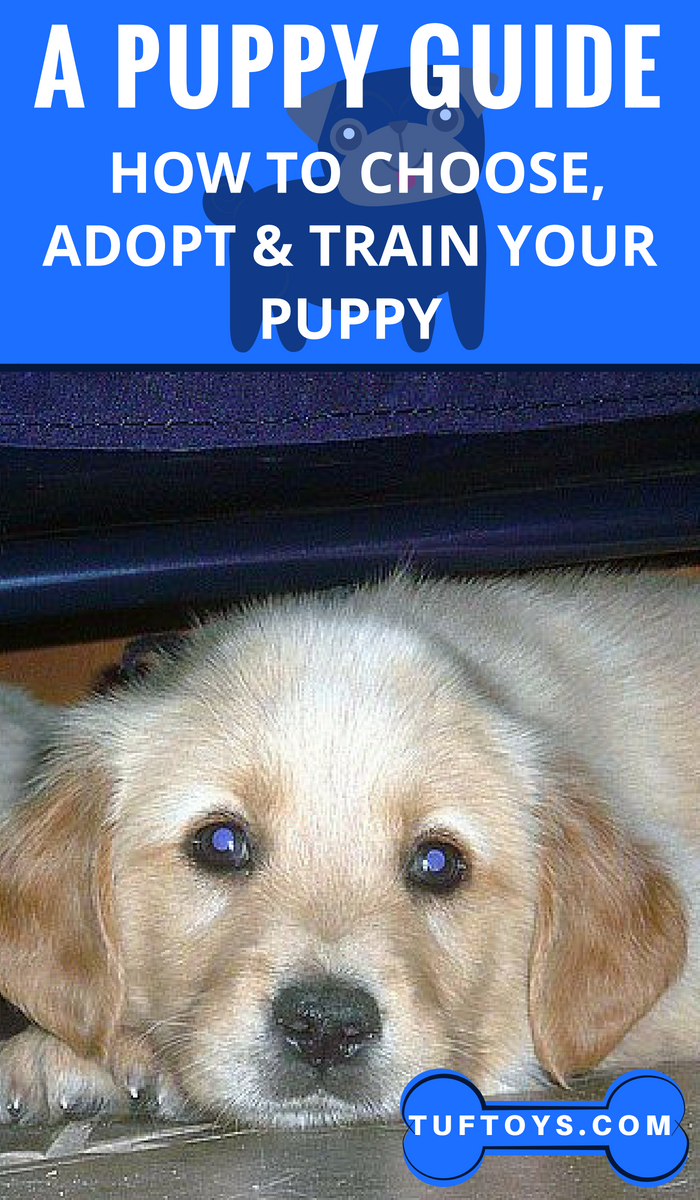 How To Choose Adopt Train Your Puppy Puppy Training Training Your Puppy Funny Dog Memes