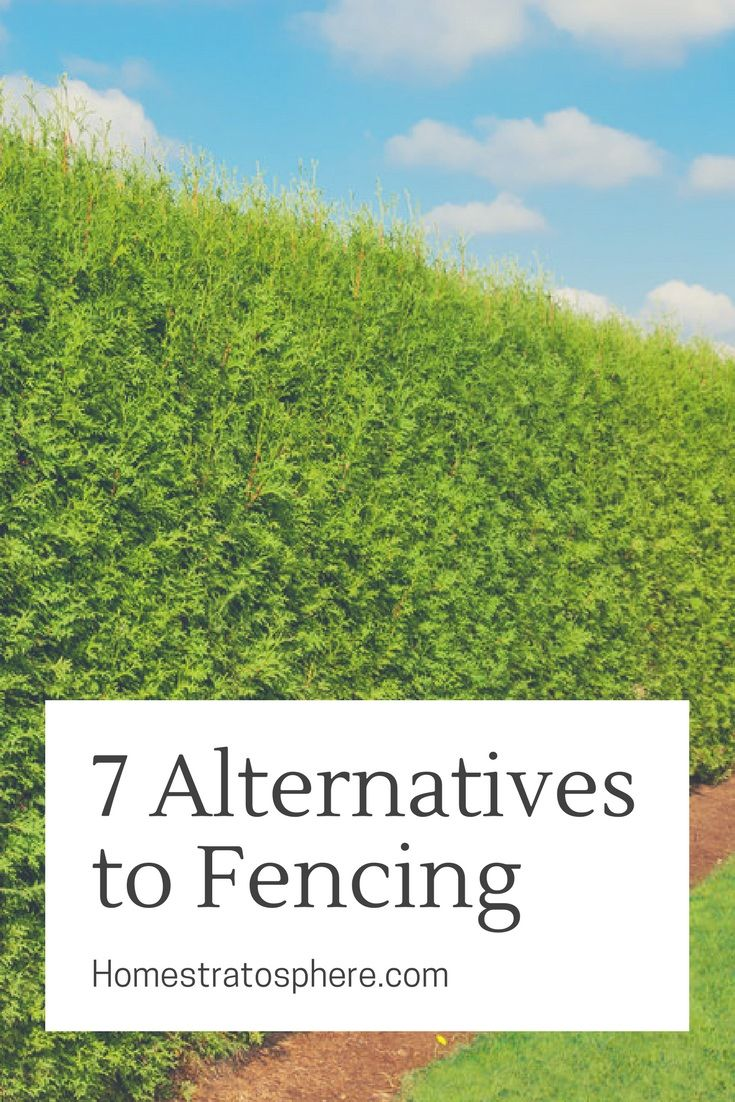7 Viable Alternatives to Fencing for Your Backyard #privacylandscaping