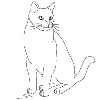 1000+ images about Draw a cat on Pinterest   Mouths, How to draw ...