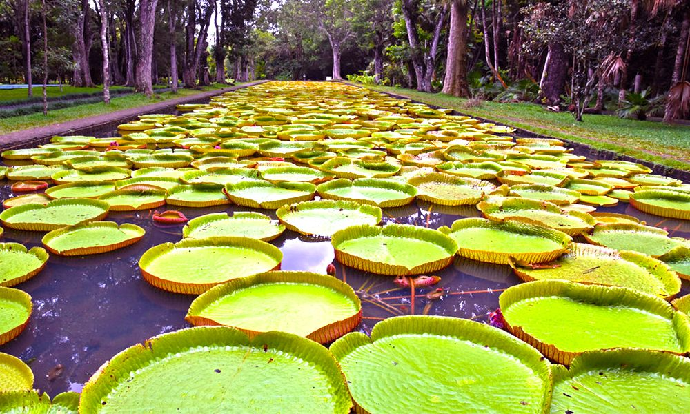 Amazing Things To Do In Mauritius Botanical Garden