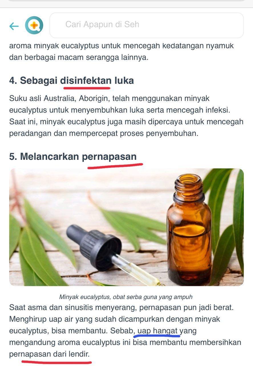 17++ Manfaat eucalyptus essential oil ideas in 2021