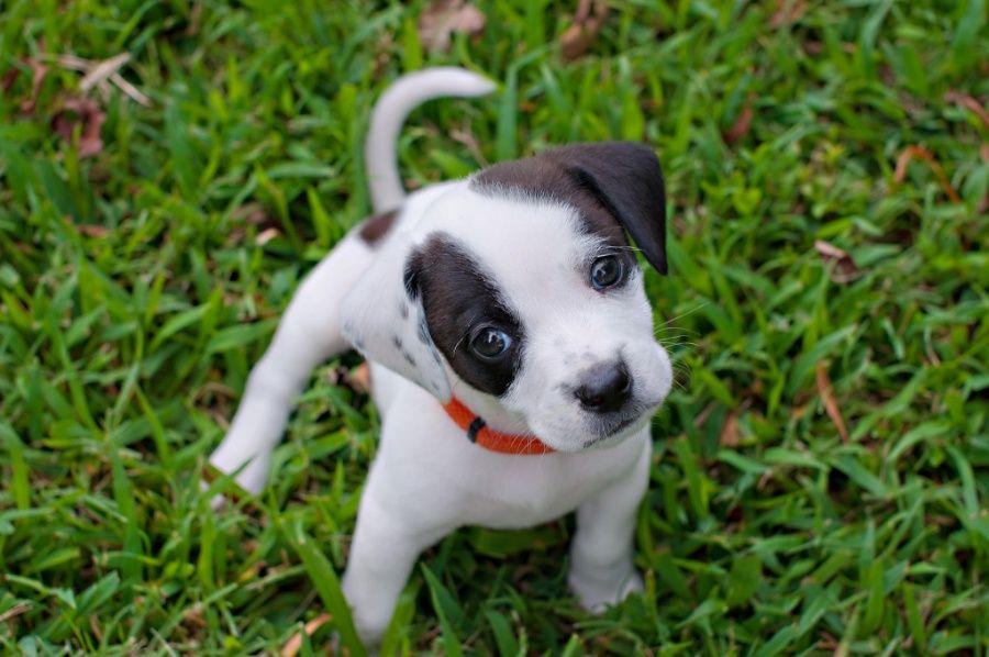 wild_baby_animals_cute-12