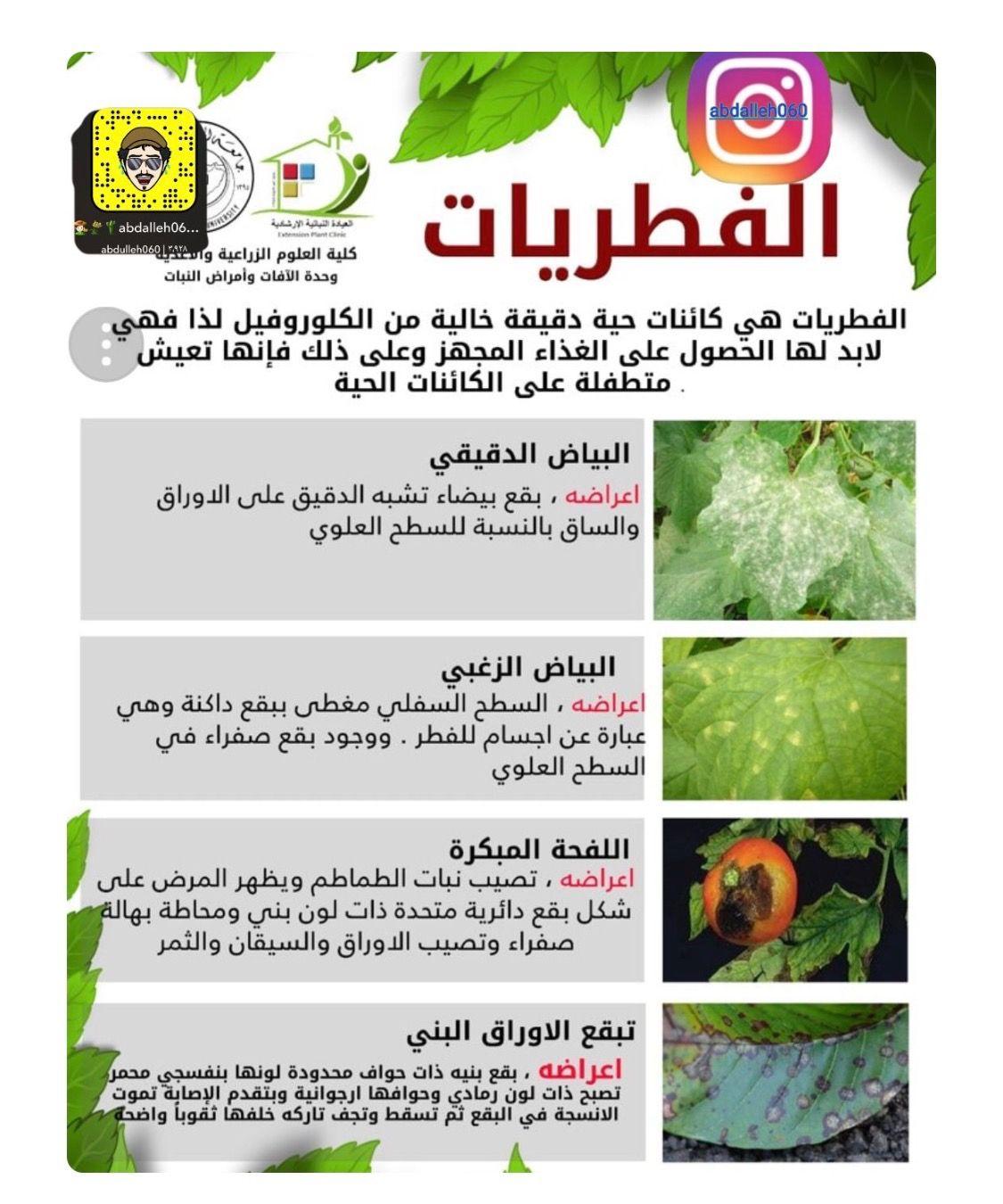 Pin By الاشقر On نباتات Growing Plants Garden Plants Plants