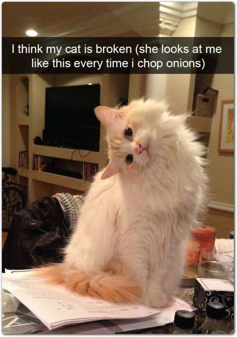 47 lustige Tiere Meme 12 47