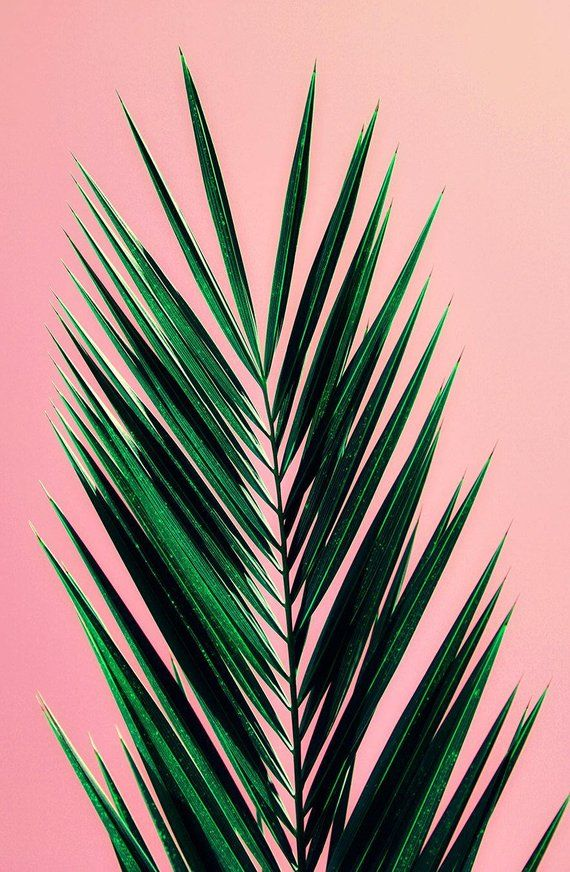 palm tree art print // photography // mid century