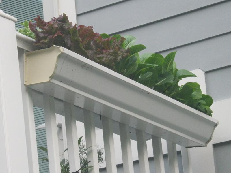 Pin By Dawn Hood On Green Thumb Gutter Garden Garden Railings Balcony Herb Gardens