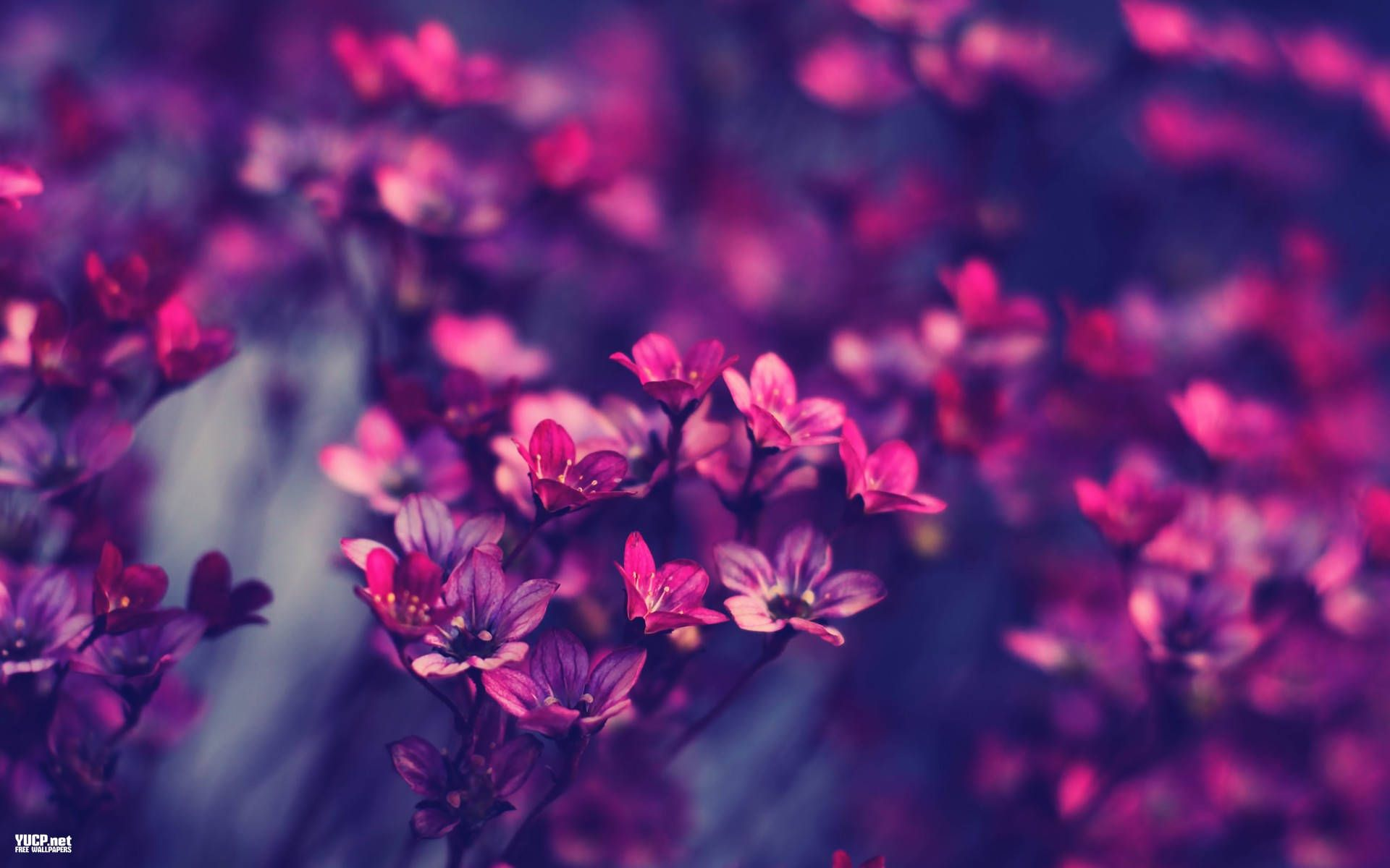 Walldiskpaper Wp Content Uploads 2014 11 Vintage Flowers Wallpaper Free Download