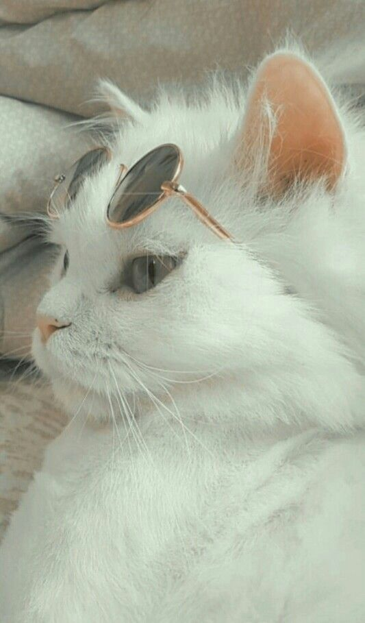 Lockscreen Wallpaper Wallpapers Cute Cat Wallpaper Cute Baby Cats Cute Animal Photos
