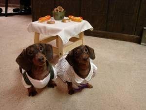 Halloween Costumes Dachshund Halloween Costumes Sausage Dog Cute Animals