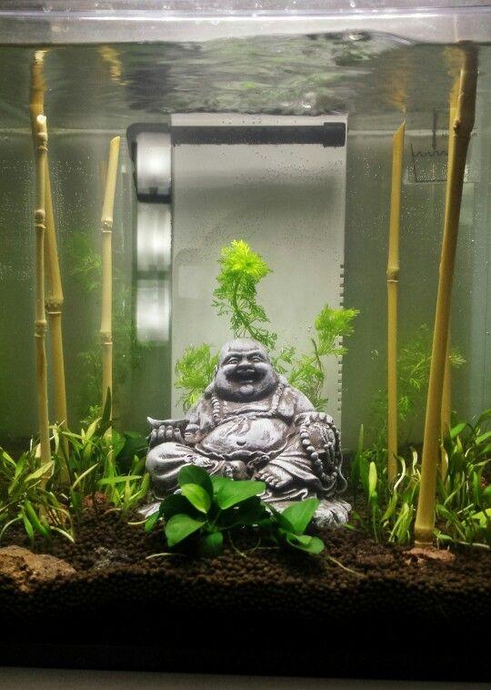 My Nano Aquarium Zen Aquarium Aquarium Nano Aquarium
