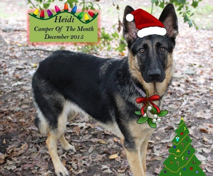 December 2015,   Camp Mimi Pet Resort Video