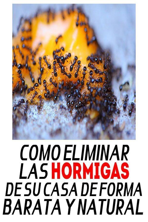 Como Acabar Con Las Hormigas Pin En Plantas