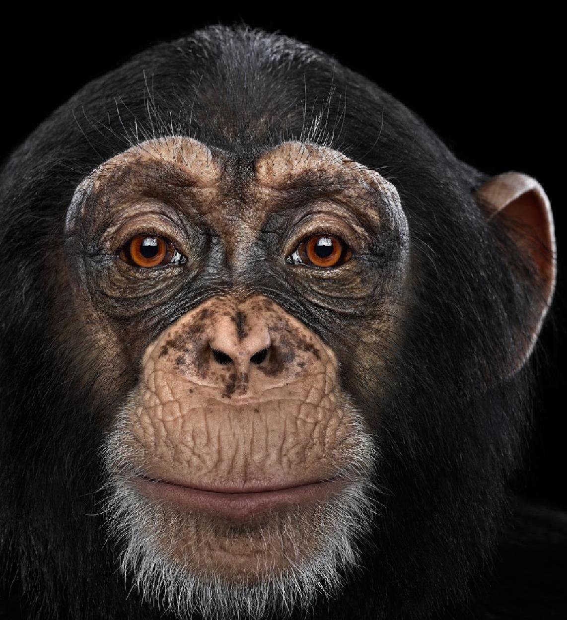 картинки с мордами обезьяны территория отеля утопает