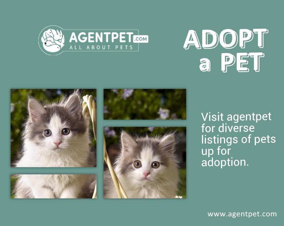 Adot A Pet Pets Pets Online Pet Relocation
