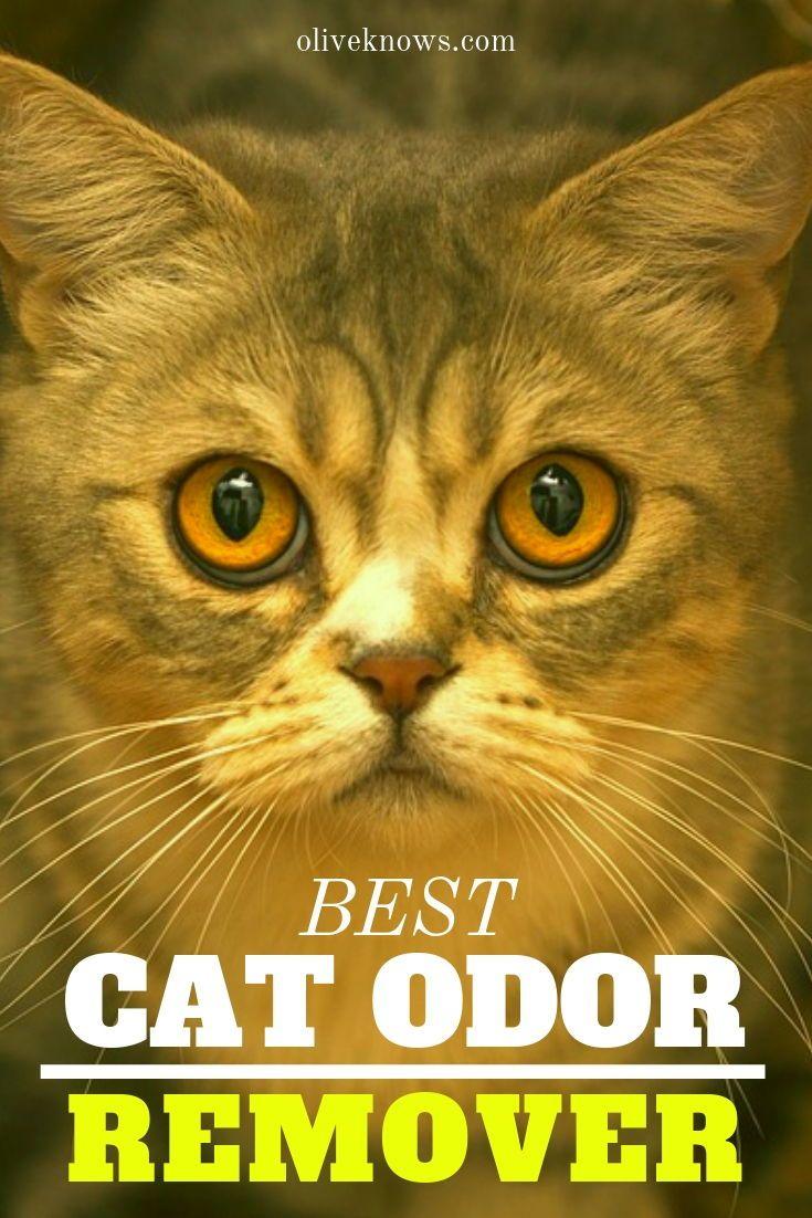 Best Cat Odor Remover Cool Cats Cats Pregnant Cat