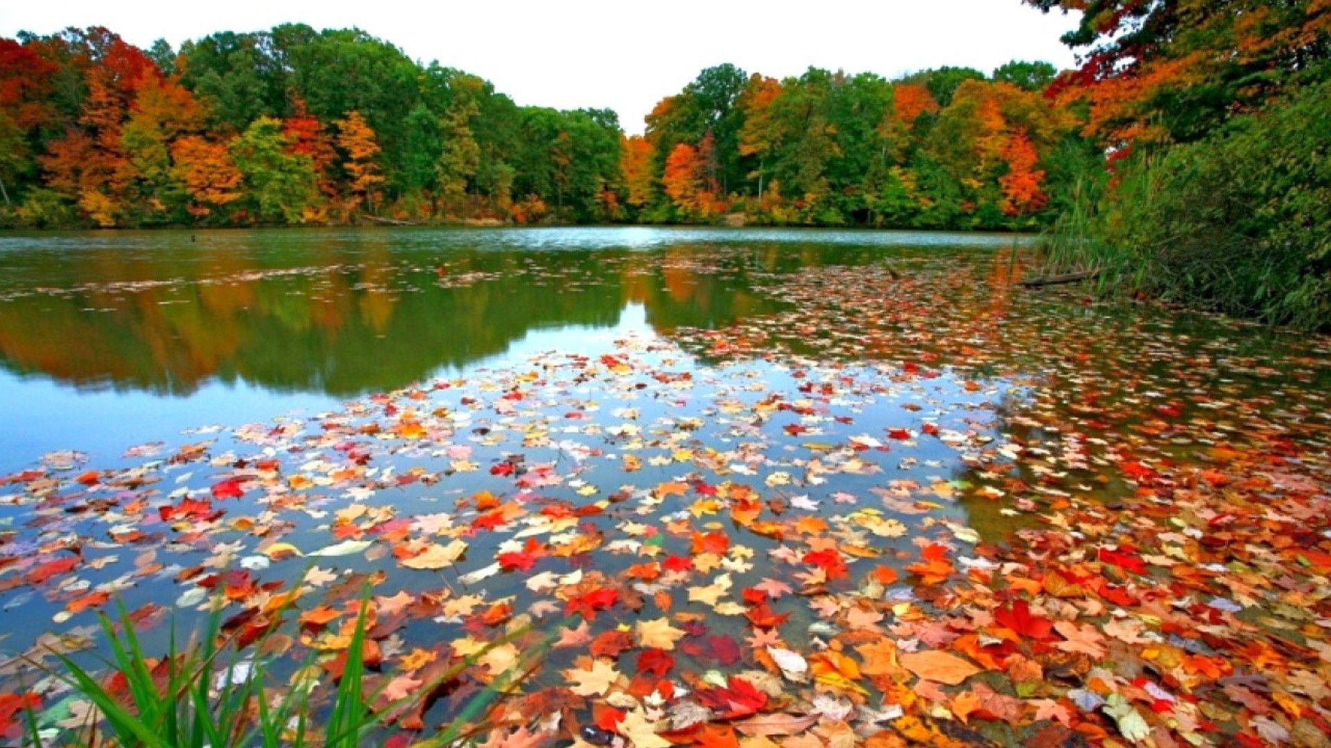Fall Foliage Wallpapers For Desktop Wallpaper Desktop Wallpaper Fall Fall Wallpaper Autumn Leaves Wallpaper