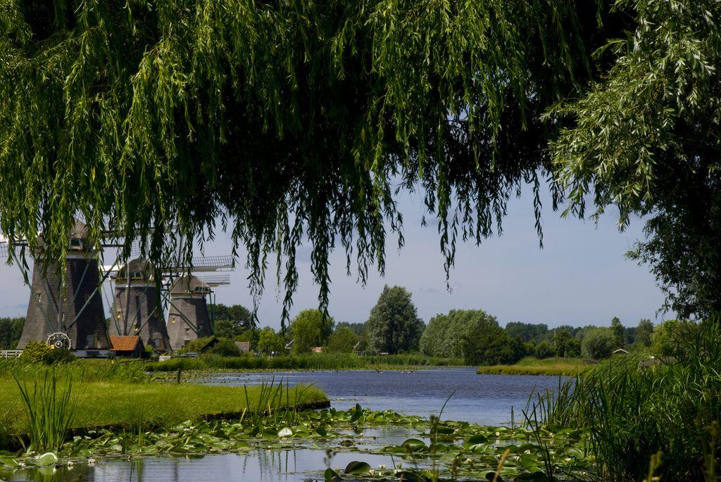The Netherlands I love, green, windmills, water, polders...