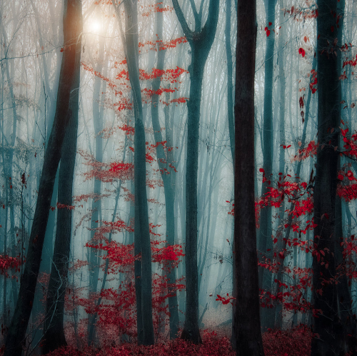 Pathways Budapest-based photographer Ildiko Neer shares the majestic serenity and enigmatic beauty of nature's pathways photography | THE KHOOLL