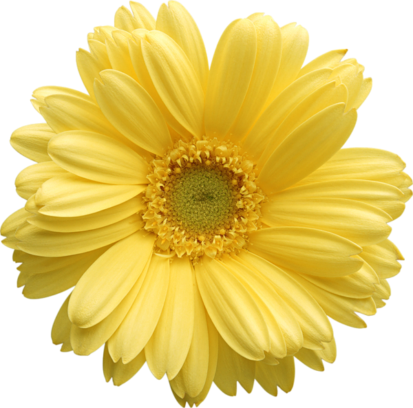 Pin von Courtney Patterson auf flowers | Pinterest | Gelb und Frühling
