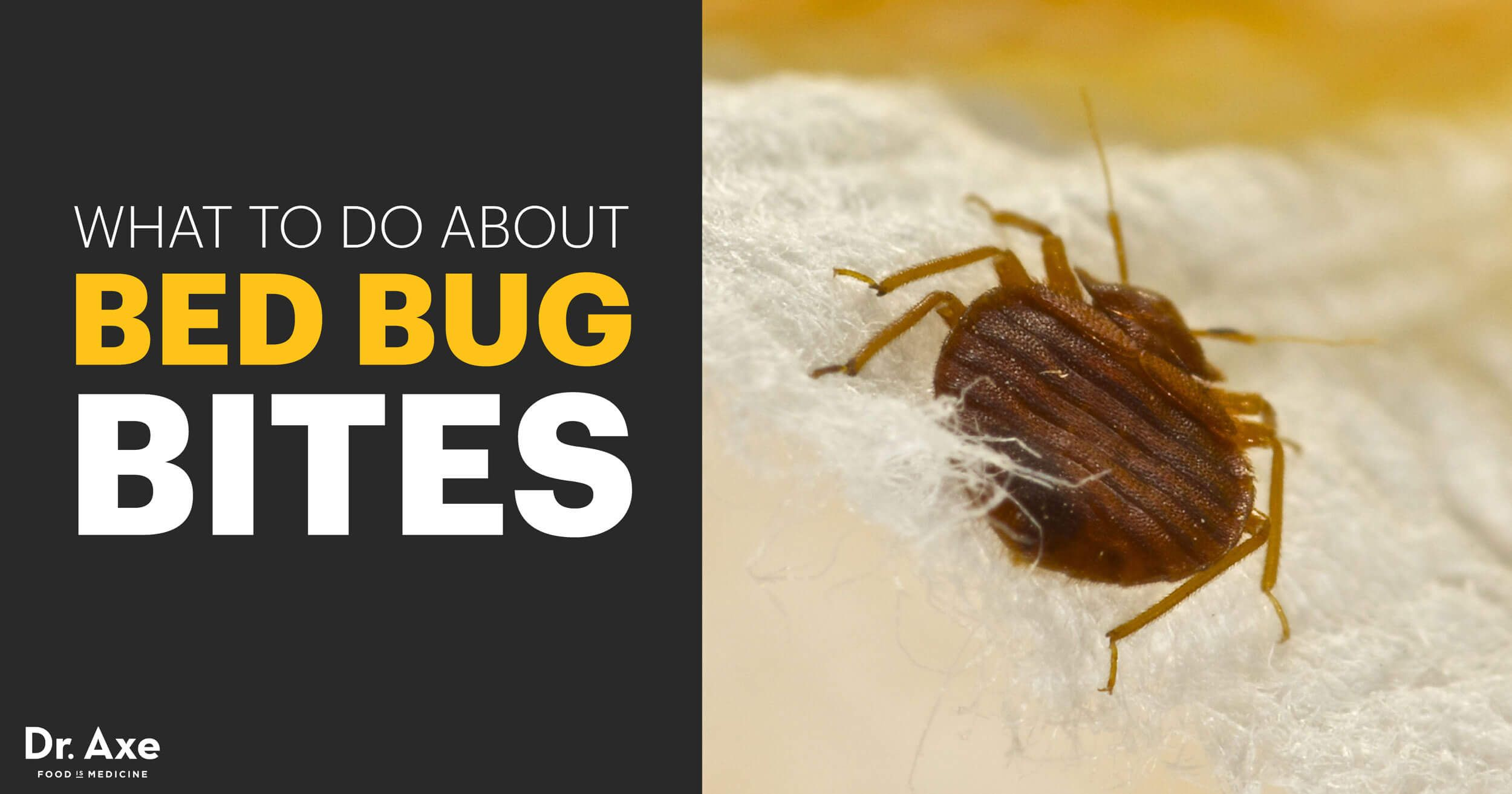 f00aeb60745ee8f0cacd97f601caf900 - How To Get Rid Of Bugs Biting Me At Night