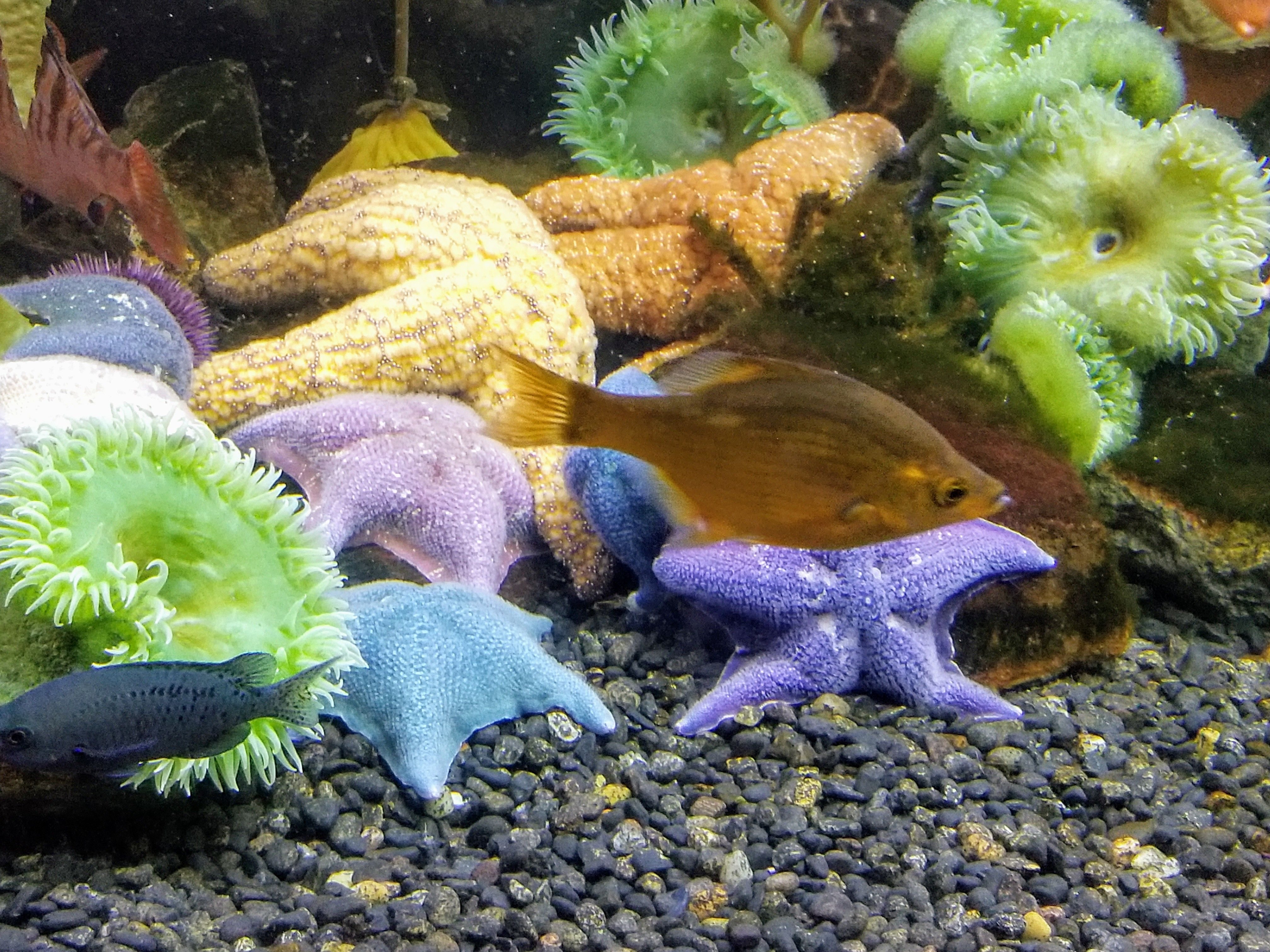 9e29b18e These starfish are so colorful, they are absolutely beautiful! | The ...