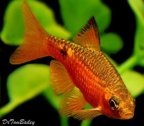 Aquariumfish Net Aquarium Fish Tropical Fish Fish