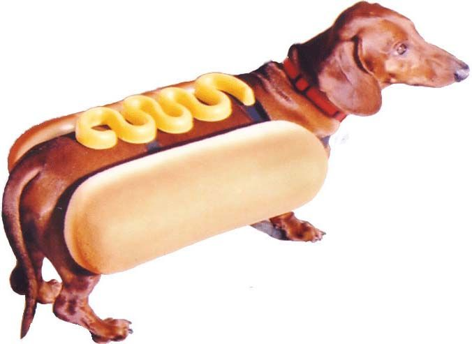 Daschund In A Hot Dog Bun Costume For The Home Hot Dogs Pet