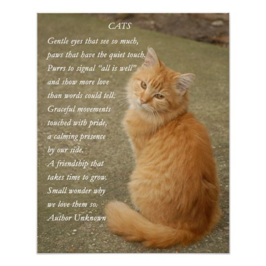 Orange Kitten Photo With Poem Poster Zazzle Com Orange Kittens Cat Poems Cats