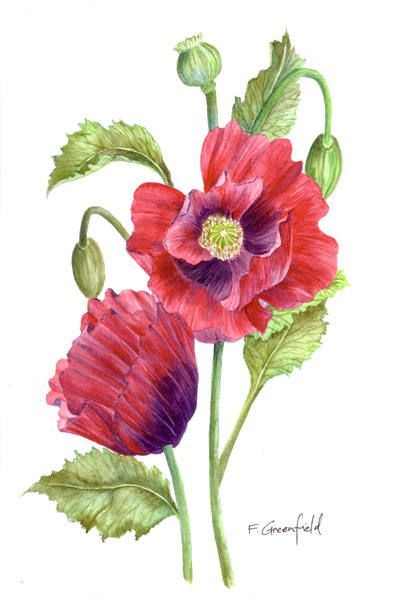 Original Watercolour Botanical Flower Painting Red Poppies