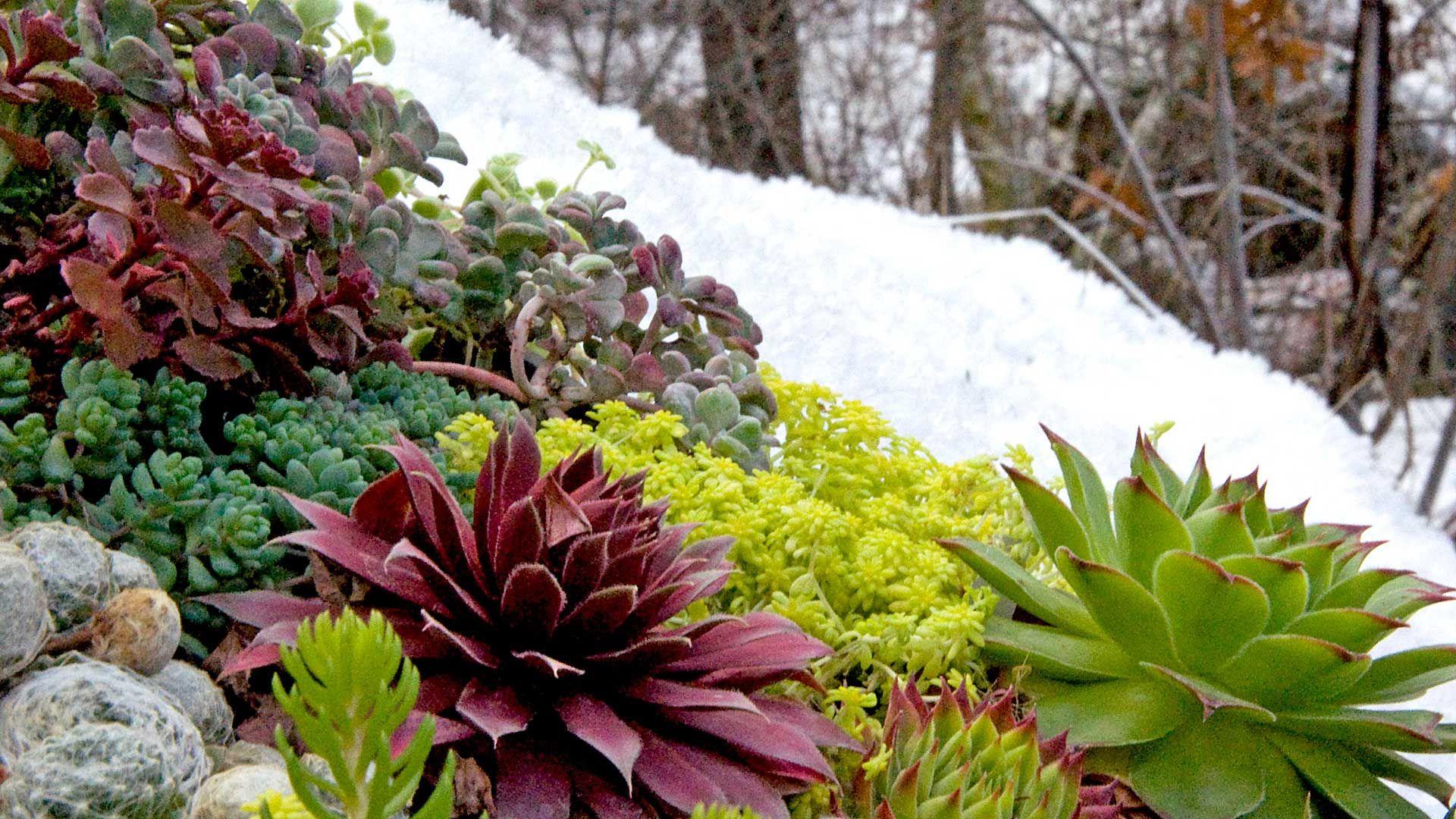 Outdoor Succulents With Winter Interest Succulent Garden Outdoor