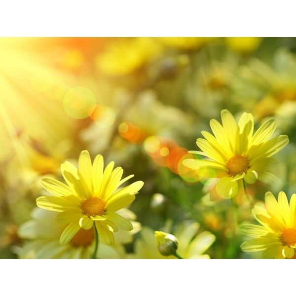 Free Burst of Summer Sunshine Wallpaper - Download The Free Burst of... ❤ liked on Polyvore