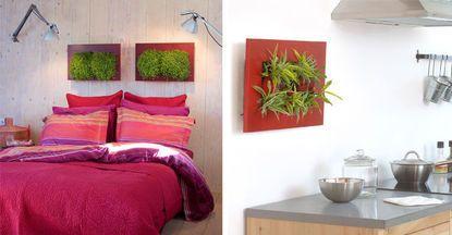 Tableaux-végétaux, Wallflower