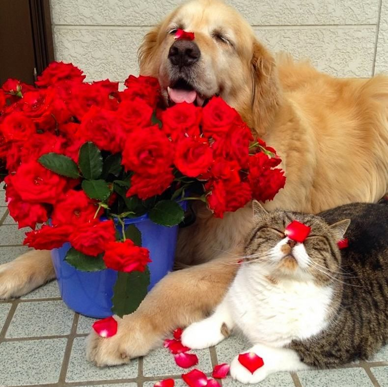 This Dog And Cat Are Best Friends And We Re All Better Off For It