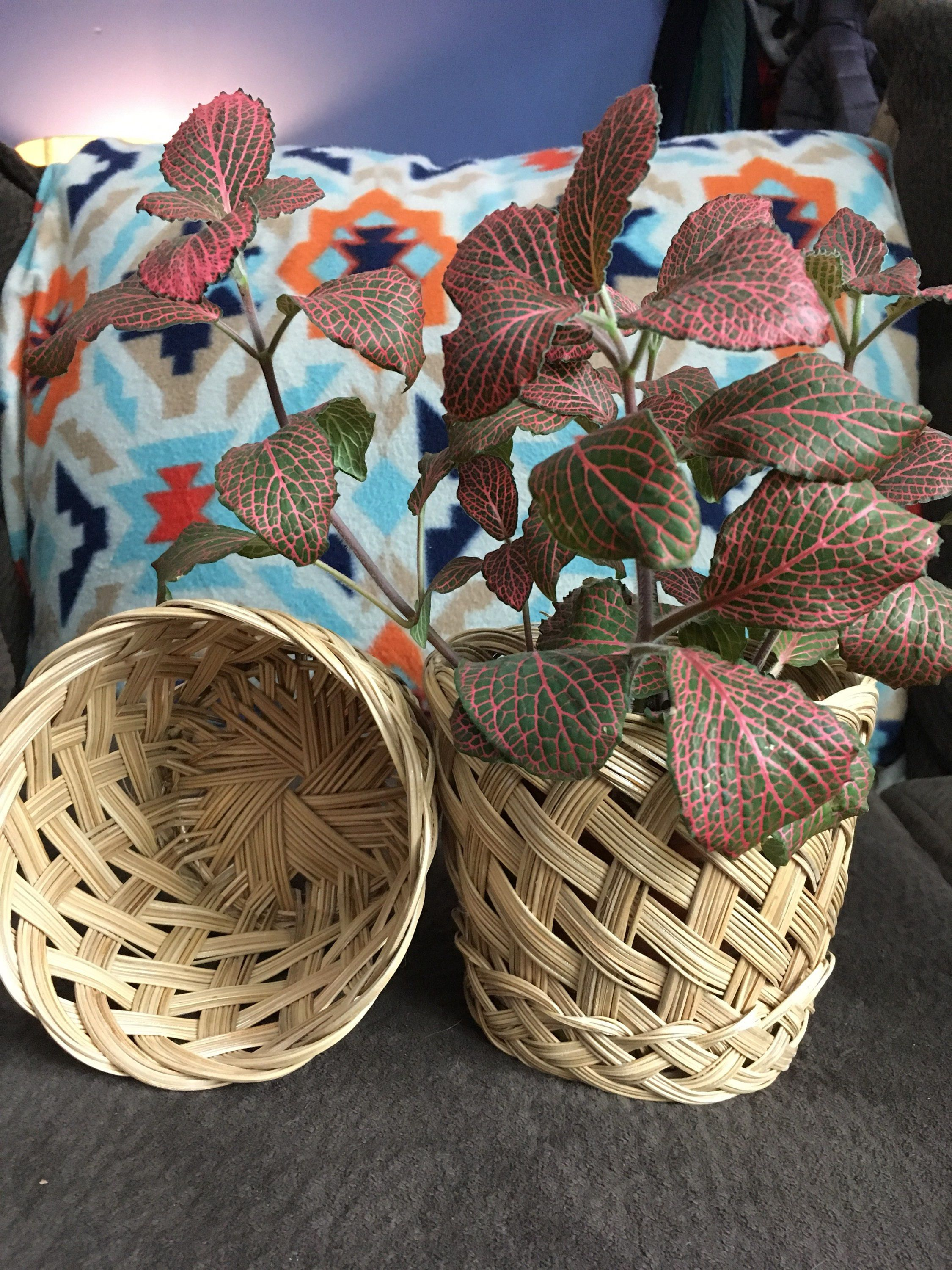 Woven pair of planter baskets boho plant basket set of two by