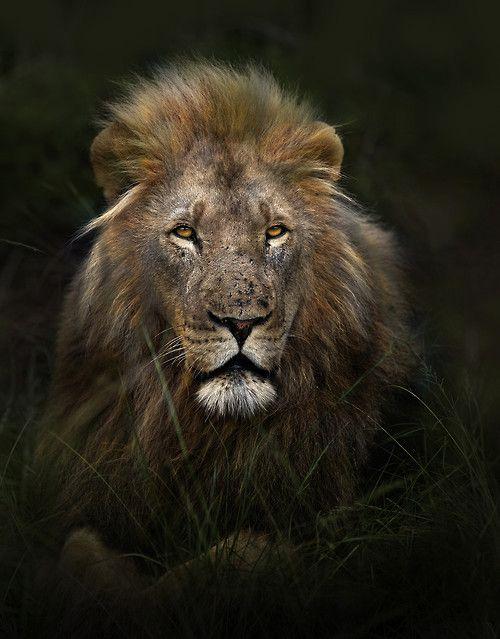 LION01 LION CROSS STITCH CHART BN!