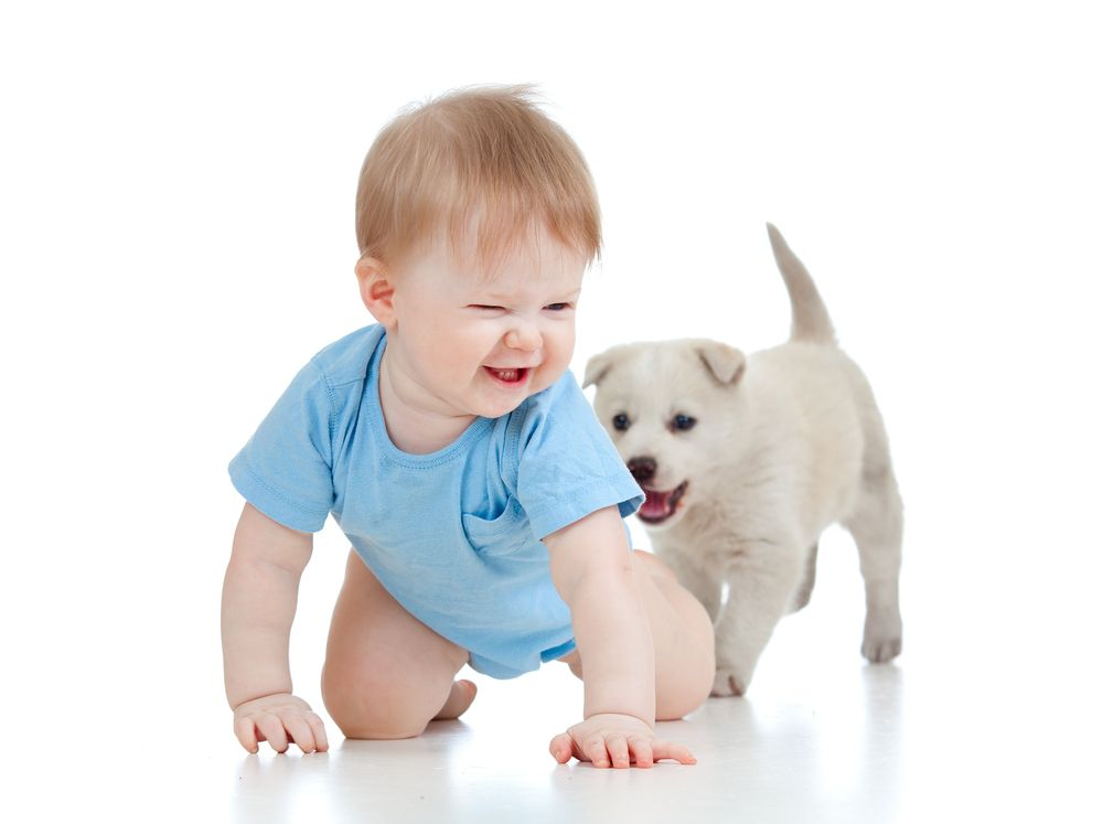 Contemporary If You Don t Smile At This Video Babies Laughing At Dogs You re Probably A Witch Beautiful - Cool baby laughing Style