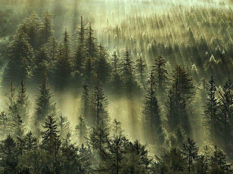 Misty Green Hills Forest Pine Mist Trees Desktop