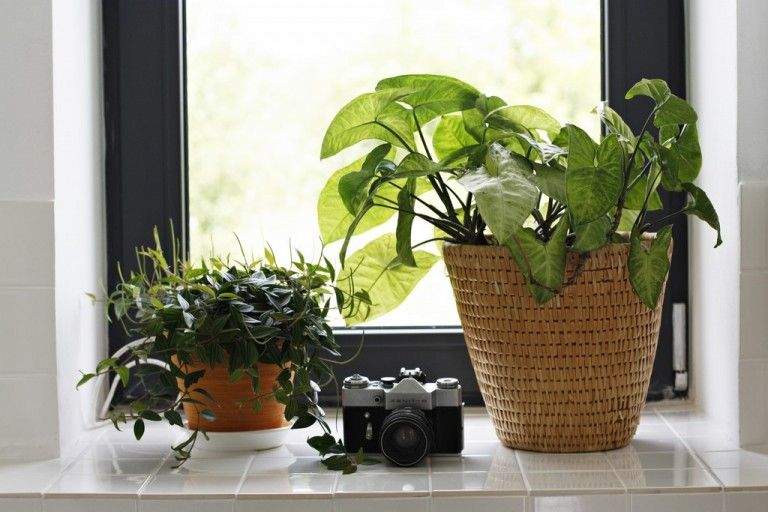 Mg 1545 Plants Planter Pots Planters
