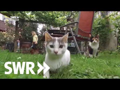 Das Geheime Leben Der Katzen I Swr Youtube Wilde Katzen Katzen Tiere